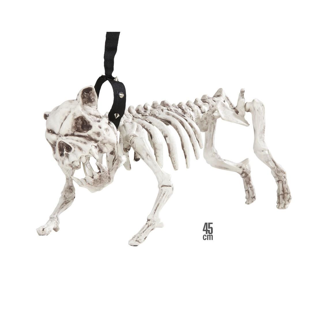 Schön Anatomie Eines Männlichen Hund Bilder - Menschliche Anatomie ...